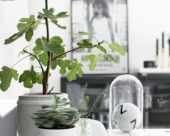 8x planten in huis - INTERIOR JUNKIE