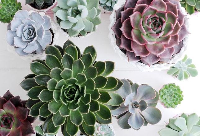 Ik ben een sucker voor succulents ofwel vetplantjes. Van alle soorten ...