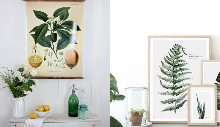 Poster Botanisch. Cool Farn Aquarell Pflanze Druck Botanischen ...