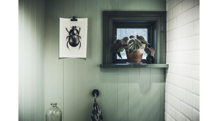 Pronken met een groentint op de muur