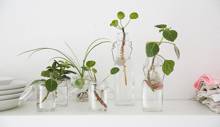 Heeft je plant stekjes? Dit kun je ermee doen!