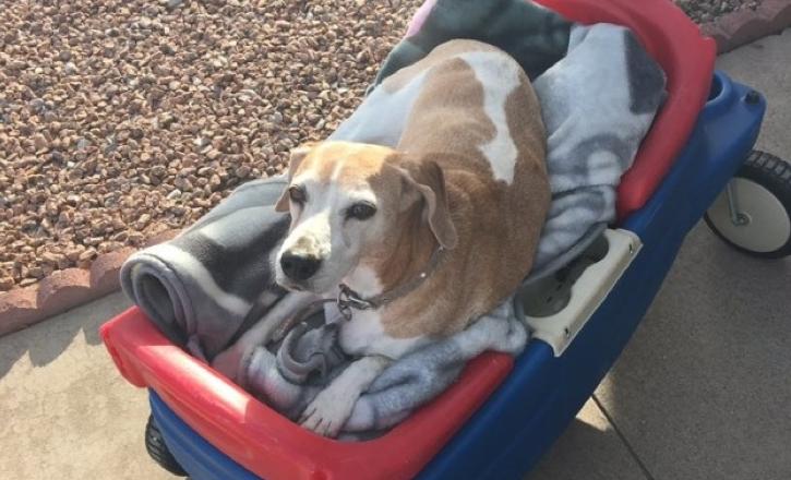 moeder-geeft-familiehond-de-mooiste-laatste-dag-voordat-hij-wordt-ingeslapen