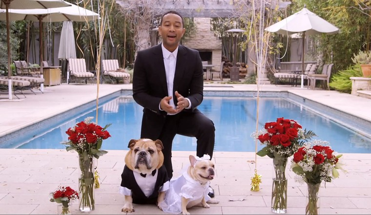 john_legend_dog_wedding