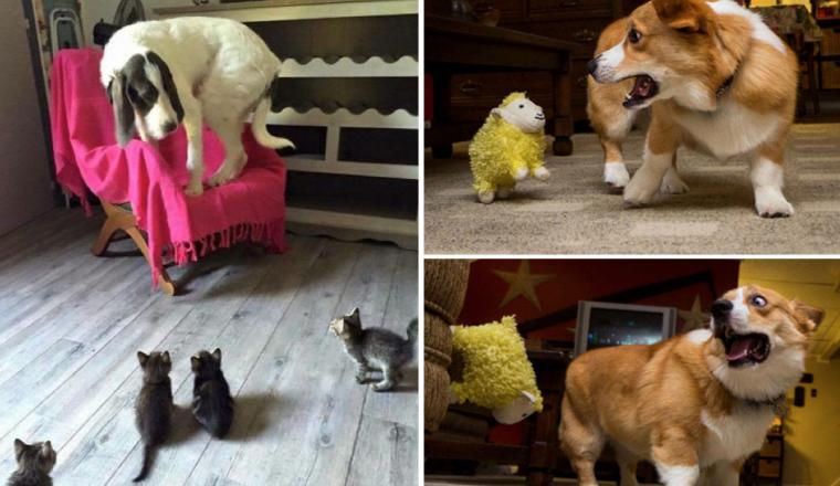 8 foto's die bewijzen dat zelfs grote honden bang voor kleine dingen kunnen zijn