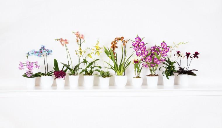 orchidee-type-tentoonstelling