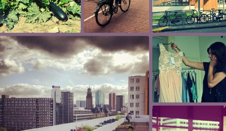 Collage rondleiding Rotterdam