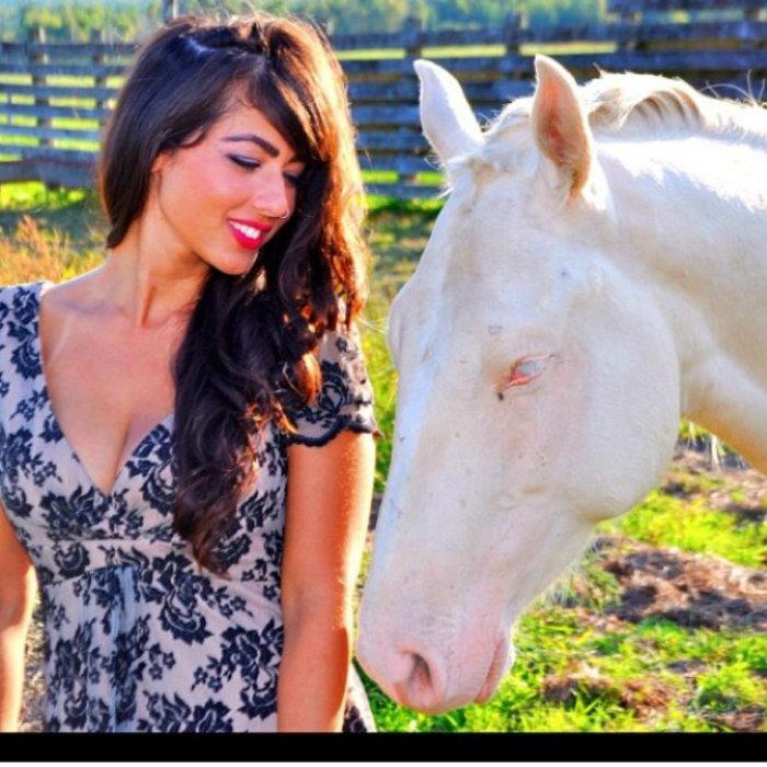 Shara horse