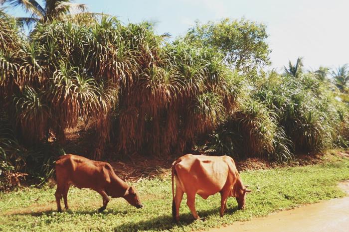 Travel Report Vietnam Part III-10