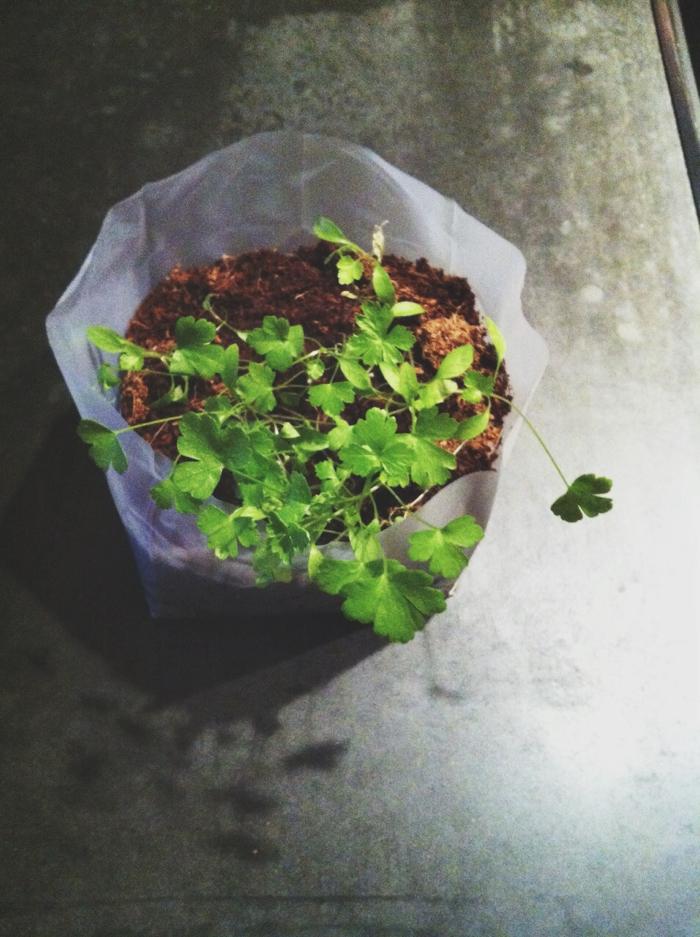 Urban Gardening1