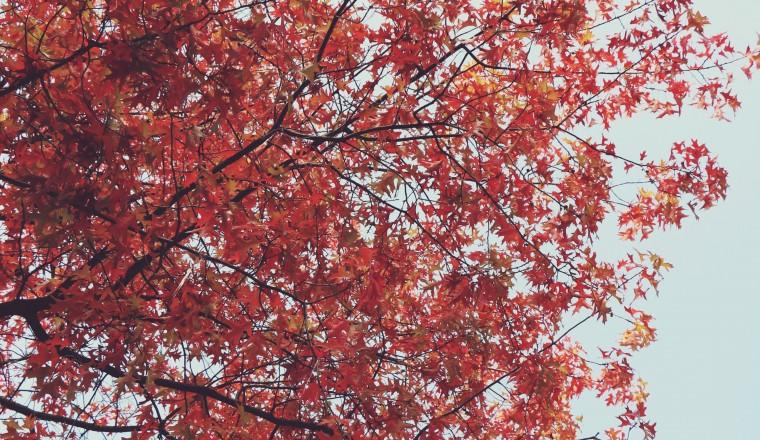 Herfst 5