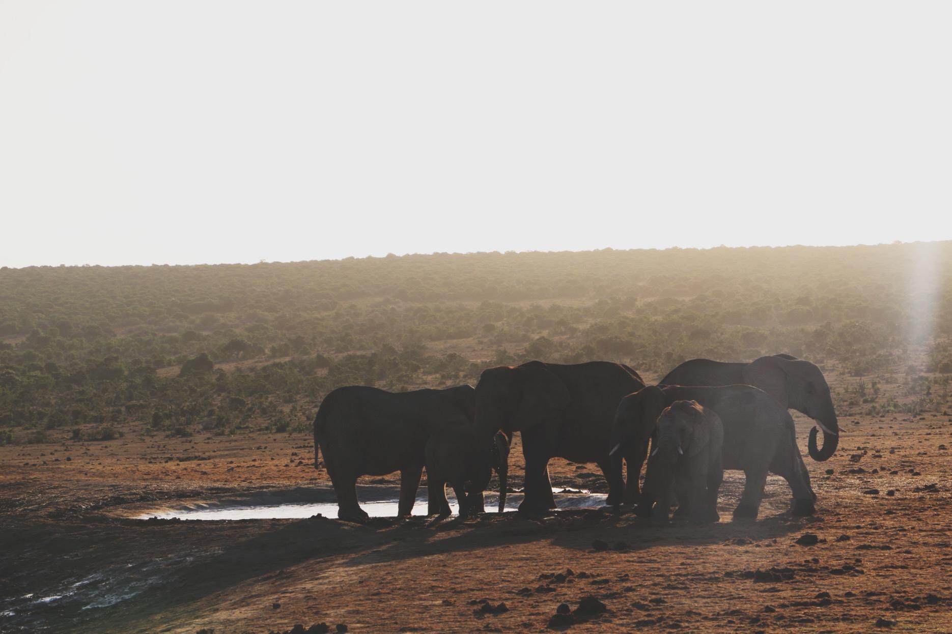 Een brief aan Zuid-Afrika - 19