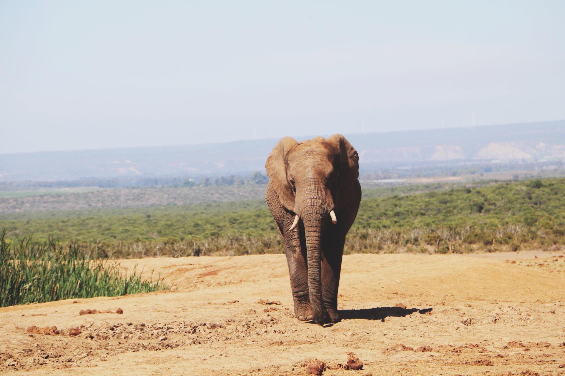 Een brief aan Zuid-Afrika - 21