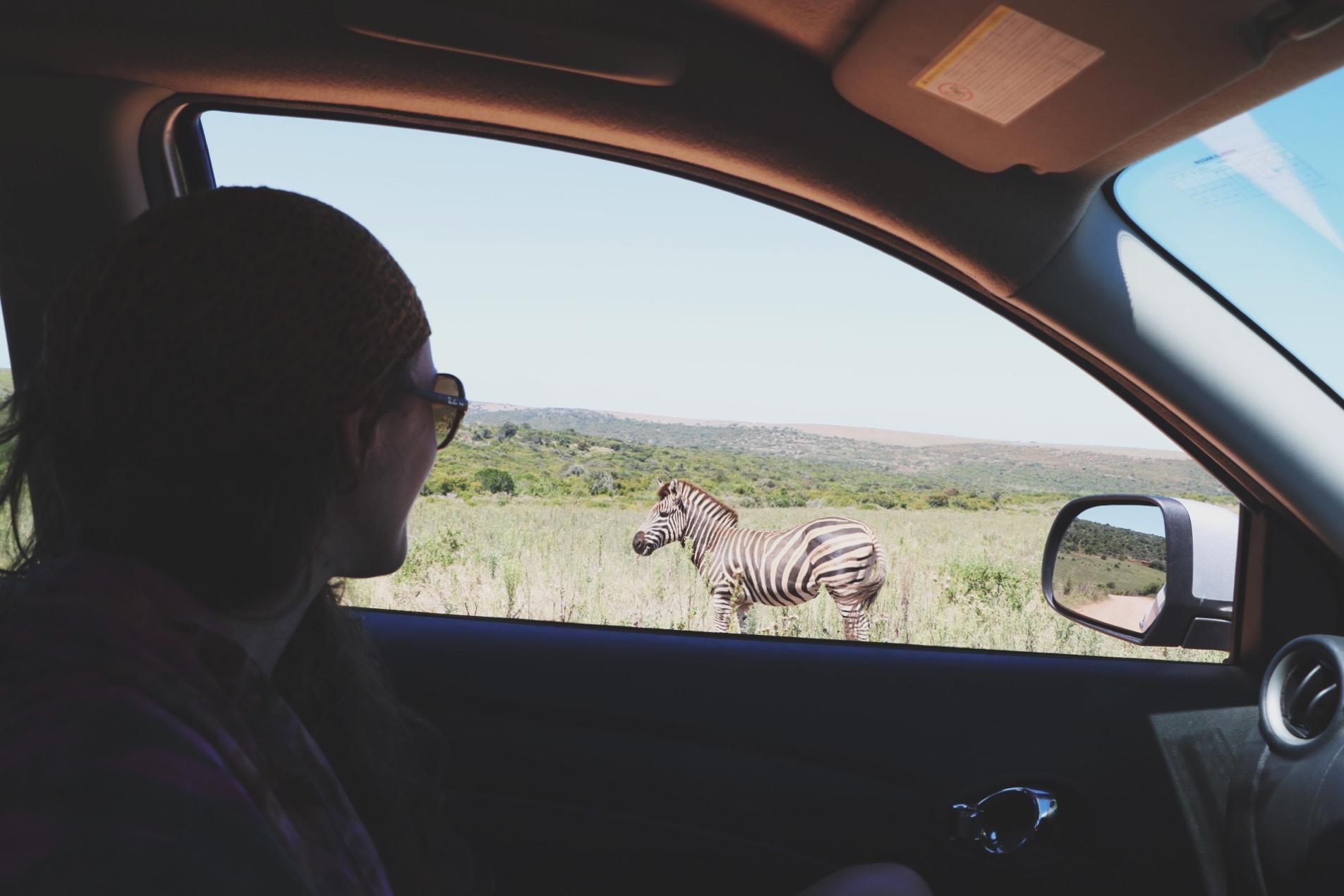 Zuid-Afrika Garden Route Tips - Addo 2