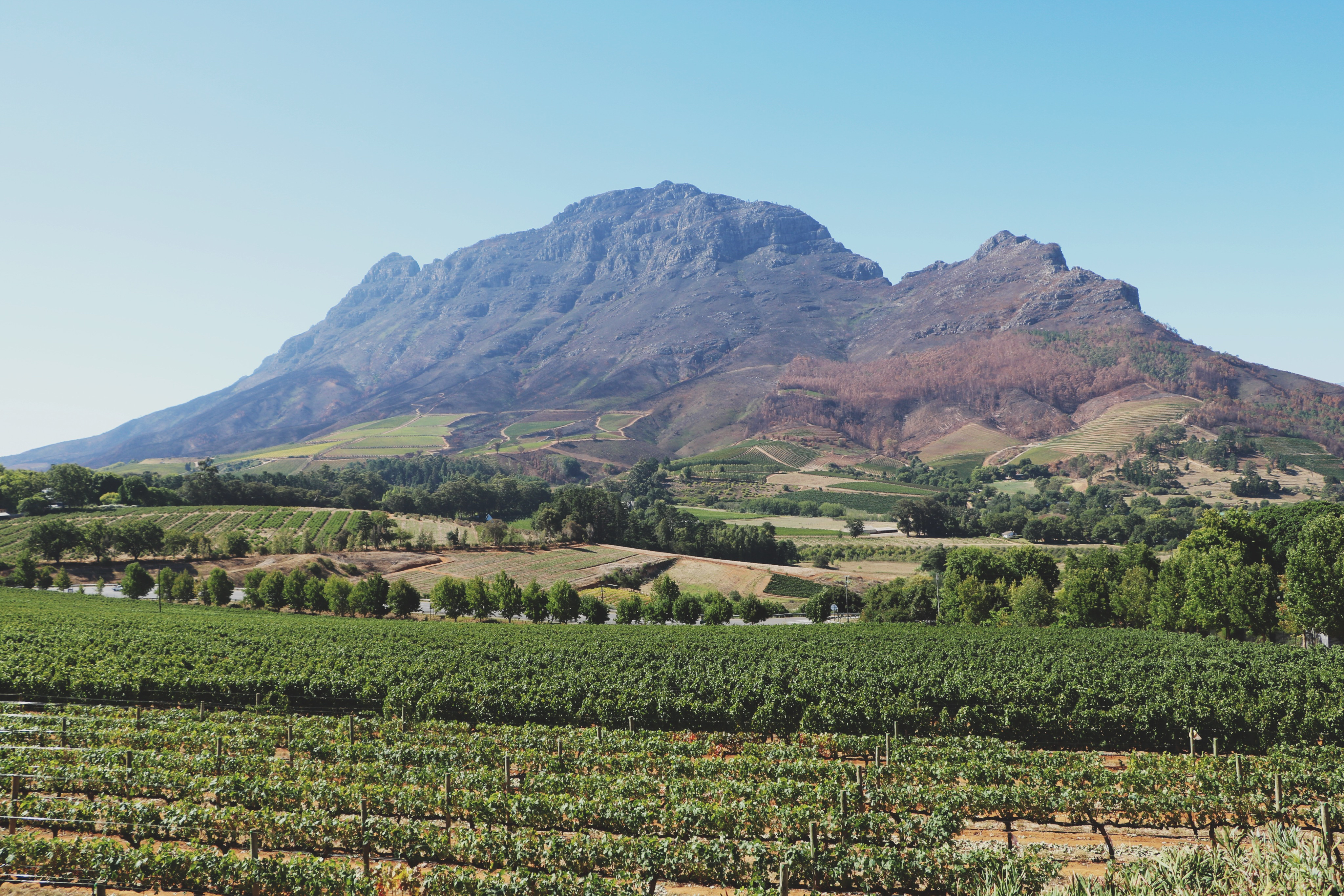 Zuid-Afrika Garden Route Tips - Stellenbosch 2