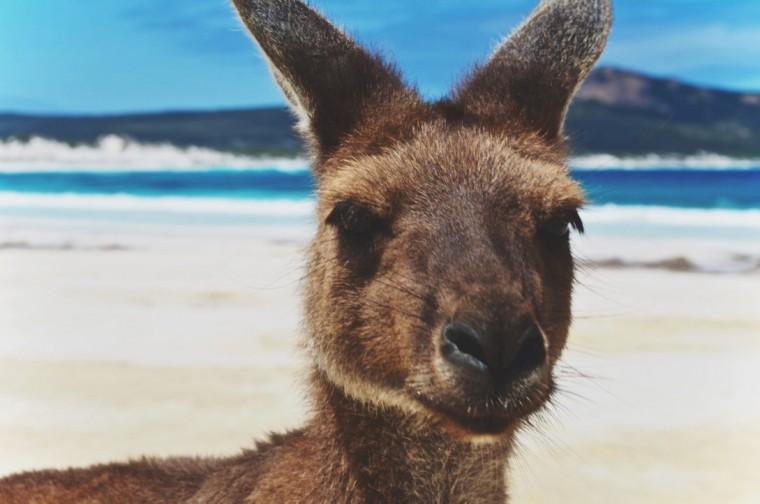 Australie - Dieren - 1