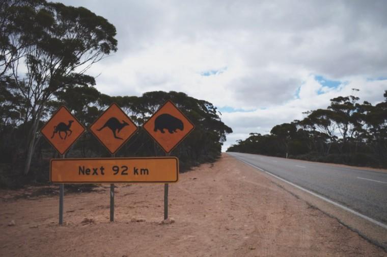 Australie - Dieren - 3