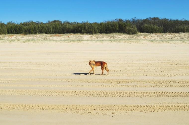 Australie - Dieren - 4