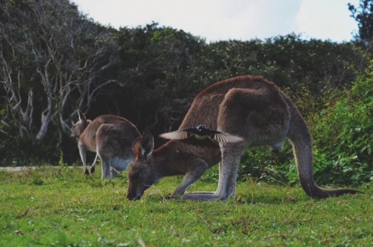 Australie - Dieren - 5