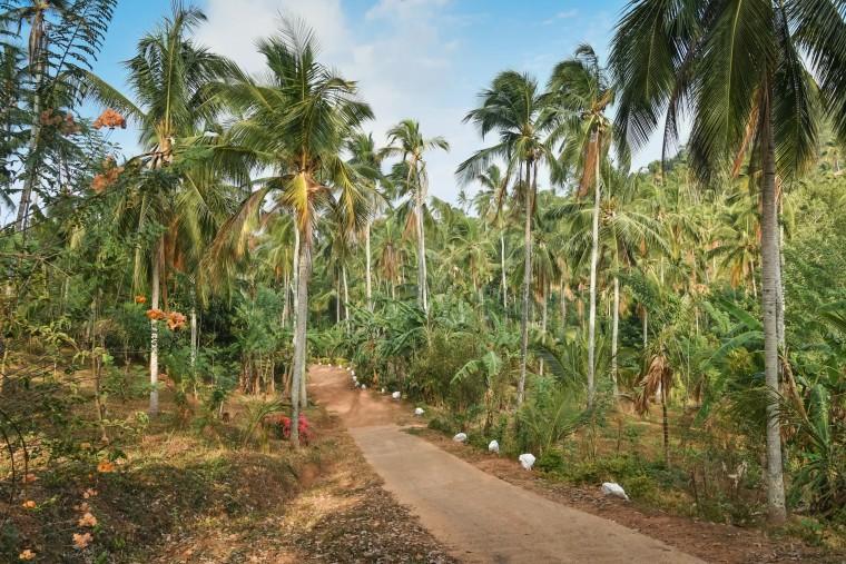 duurzaam-ondernemen-jimsfarm-sri-lanka-moderne-hippies-010