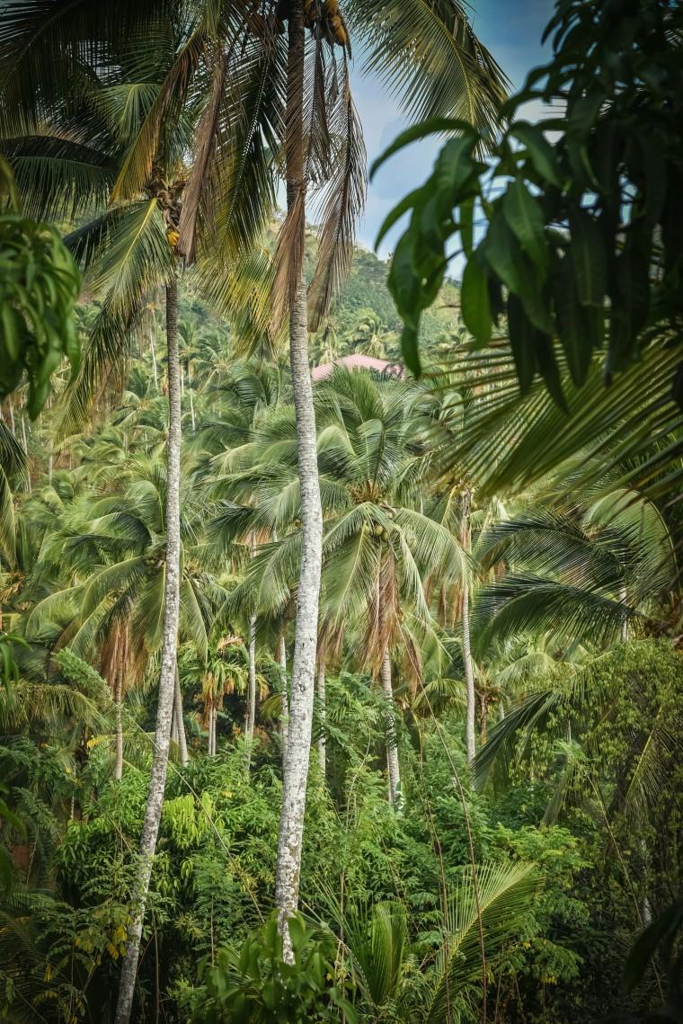 duurzaam-ondernemen-jimsfarm-sri-lanka-moderne-hippies-05