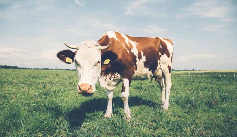 Vlees eten x Proteine - 1
