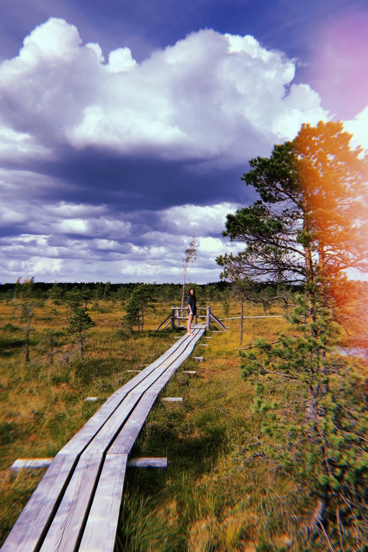 Latvia - Kemeri National Park Bog Boardwalk 5
