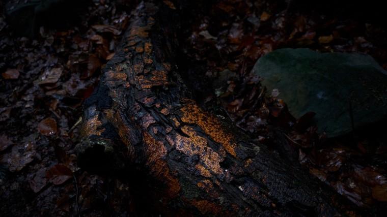 Lux-Story-Tjeerd Rienstra-003