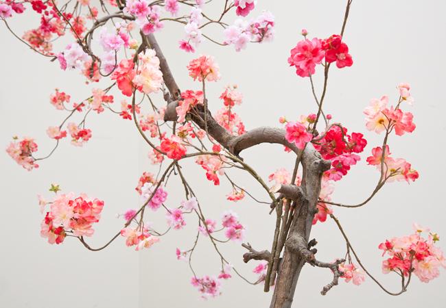 Verbazingwekkend Bloesemboom binnen, bij jou in huis: Hoe & waar vandaan? VX-48