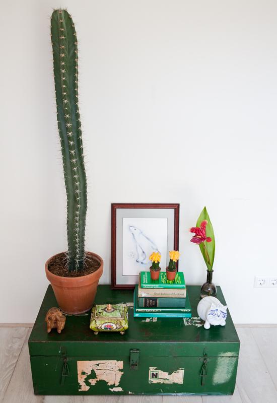 Nieuwe aanwinst: XL cactus