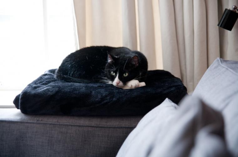 """""""Onze kat houdt graag vanuit haar hoekje een oogje in het zeil."""""""