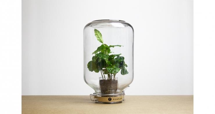 Coole onderhoudsvrije plant: de Pikaplant
