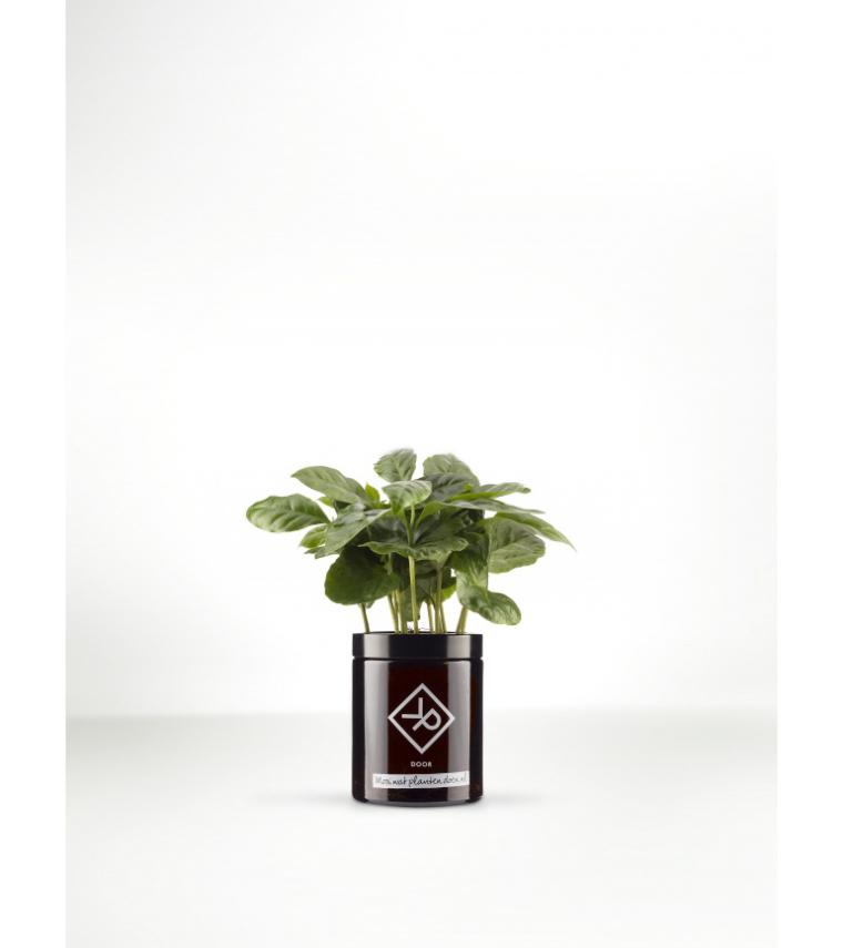 5x stoere planten voor in een mannenhuis