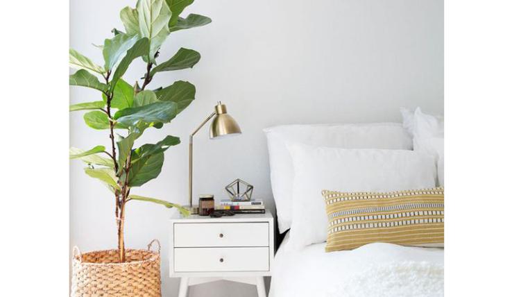 Een grote kamerplant in huis: zo style je \'m - INTERIOR JUNKIE