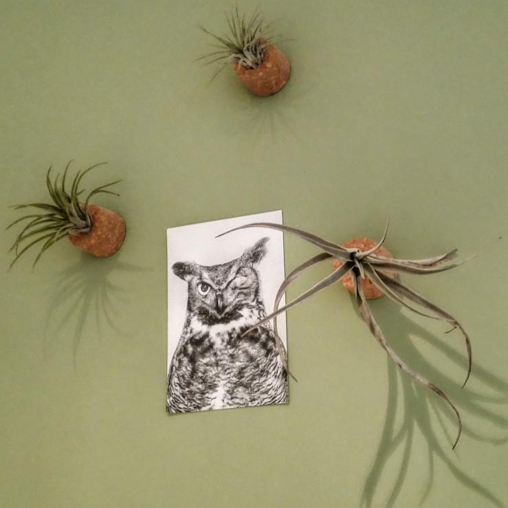 DIY: zo maak je dus een houder voor je airplantje