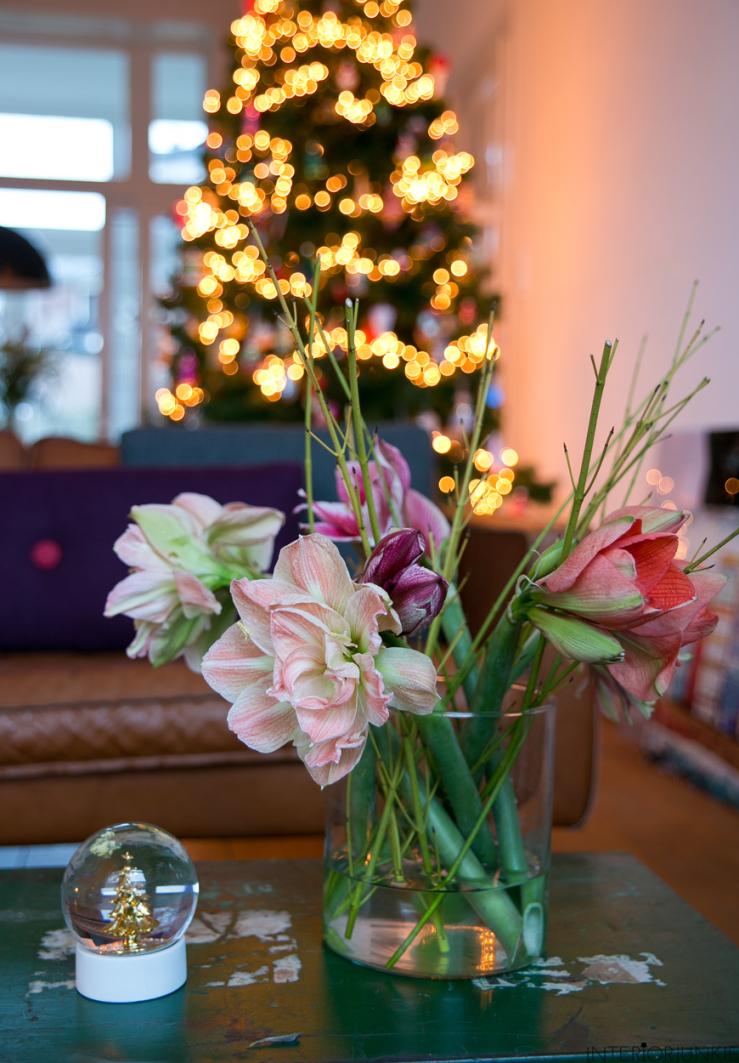 Pronken met de Amaryllis in huis