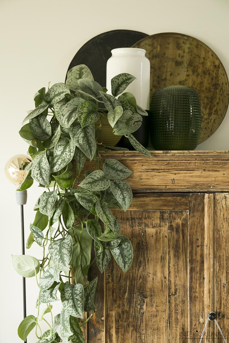 Veel planten in huis? Geef ze een bad!