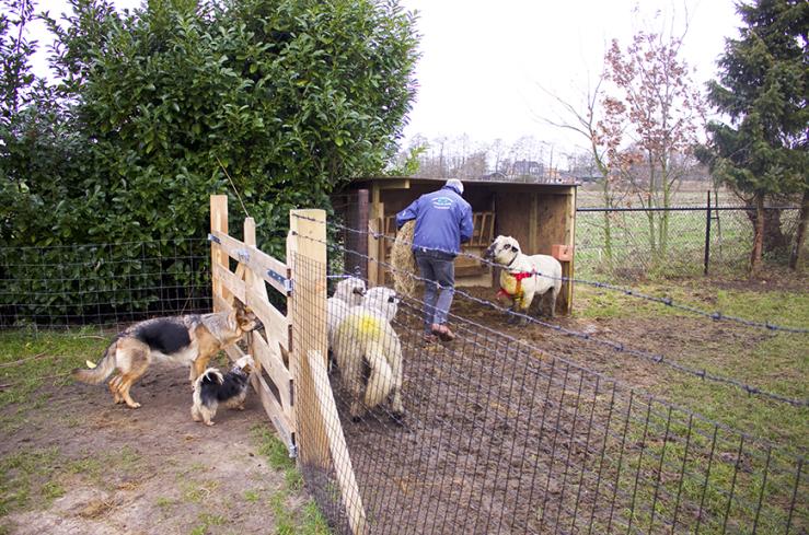 Binnenkijken in een verbouwde boerderij in Ederveen