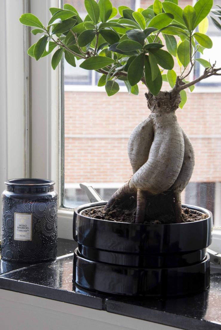 Het bonsai boompje is van Ikea, de kaars heb ik bij de Bijenkorf gekocht.