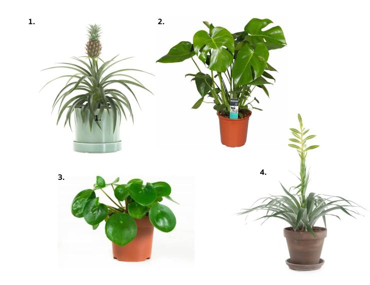 shopping-planten