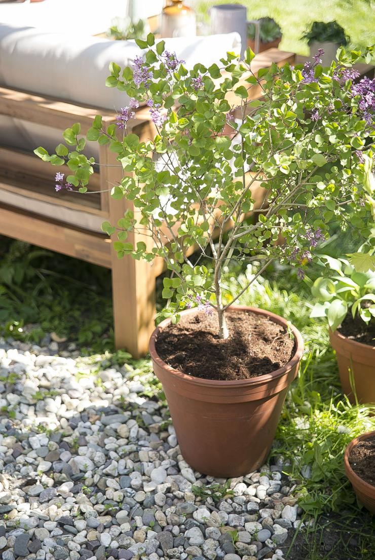 Mijn tuin inspiratie: het hoekje is eindelijk af!
