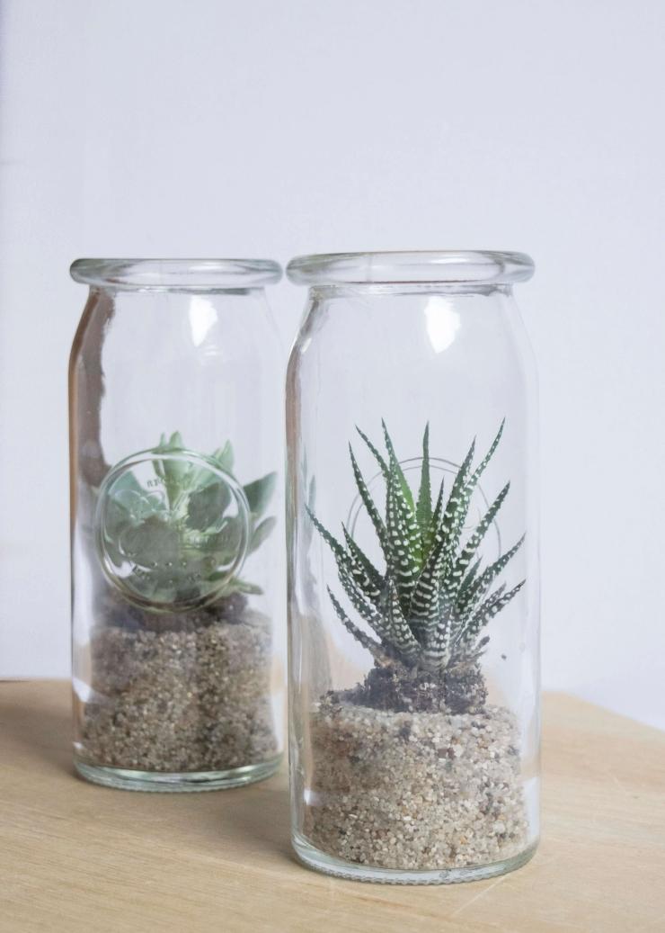 Cactus in een pot - planten