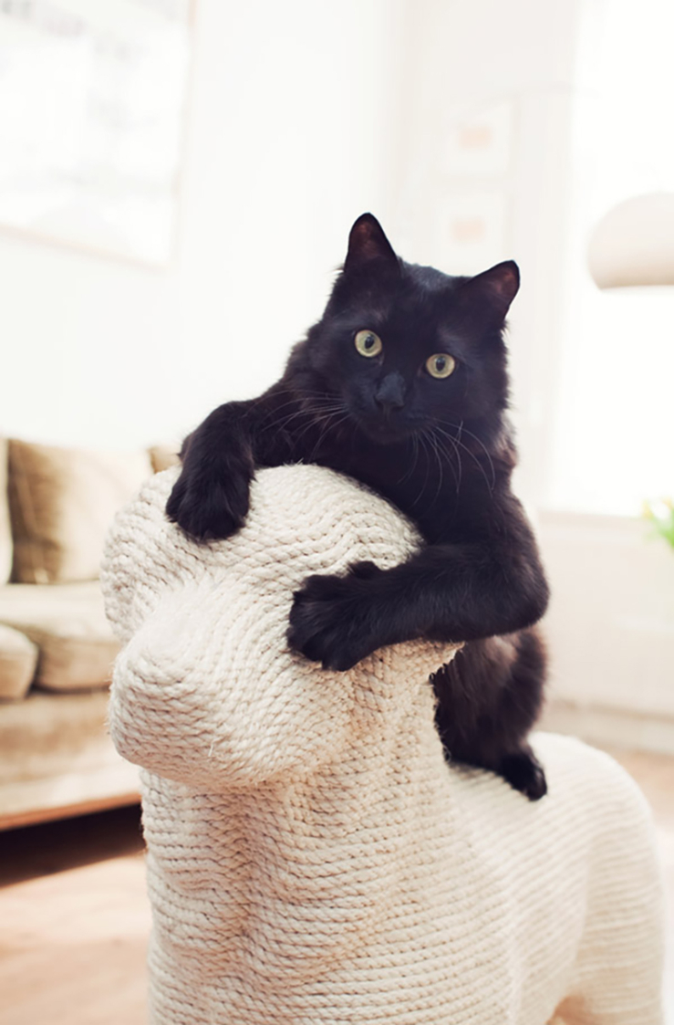 Soon Salon krabhond - kattendag