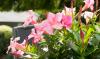 Tropisch planten paradijs