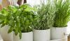 Verjaag de muggen met deze 5 planten