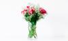 Bloemen langer mooi houden