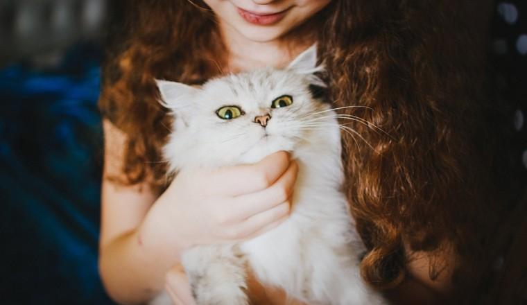 10 tekenen dat jouw kat de baas is over jou