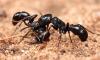Last van mieren in de tuin? Met dit trucje ben je zo vanaf!