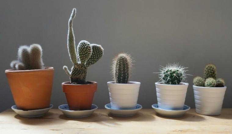tips-verzorging-cactus