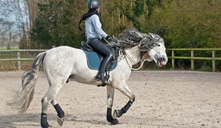 paardrijden-wel-of-geen-sport