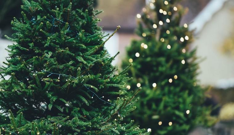 Nordmann Fijnspar Of Toch Een Andere Kerstboom Hoe Verschillen De